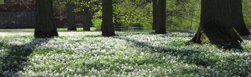 Lidköpings Trädgårdsförening